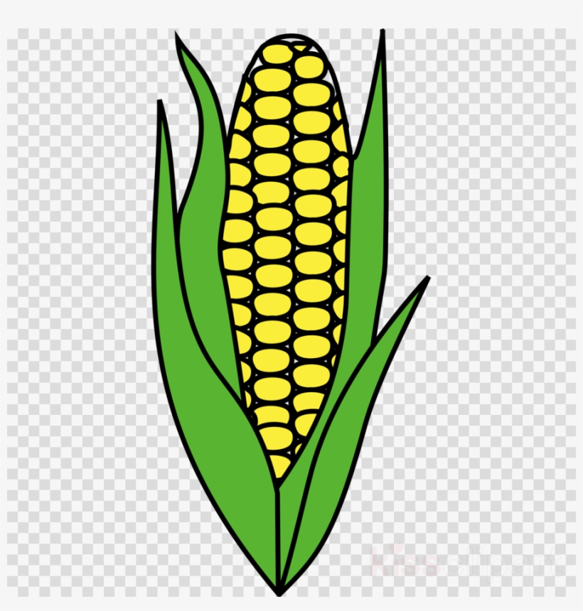 Maize Clipart Corn On The Cob Candy Corn.
