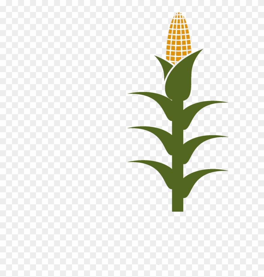 Corn Stalk Clipart (#744584).
