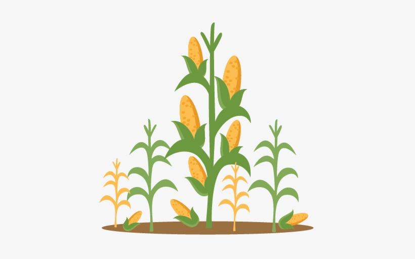Corn Stalks Svg Scrapbook Cut.