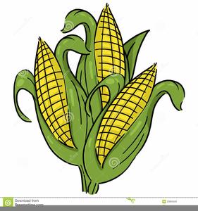 Free Clipart Of Corn Stalks.
