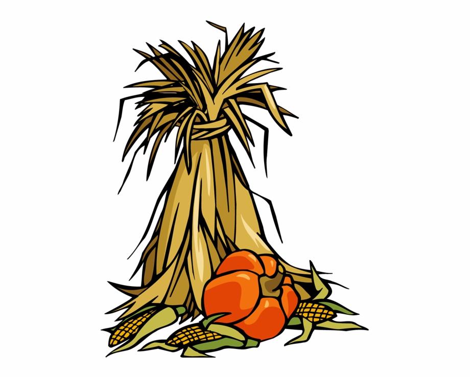 Corn Stalks Clipart.