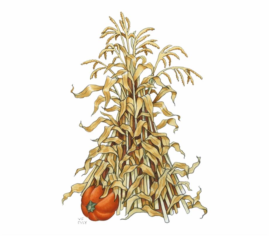 Fall Corn Stalk Clip Art.