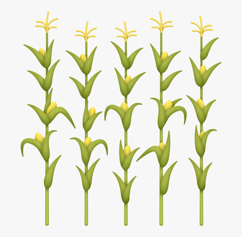 Transparent Background Corn Stalk Clipart , Transparent.