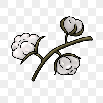 Cotton clipart cotton flower, Cotton cotton flower.