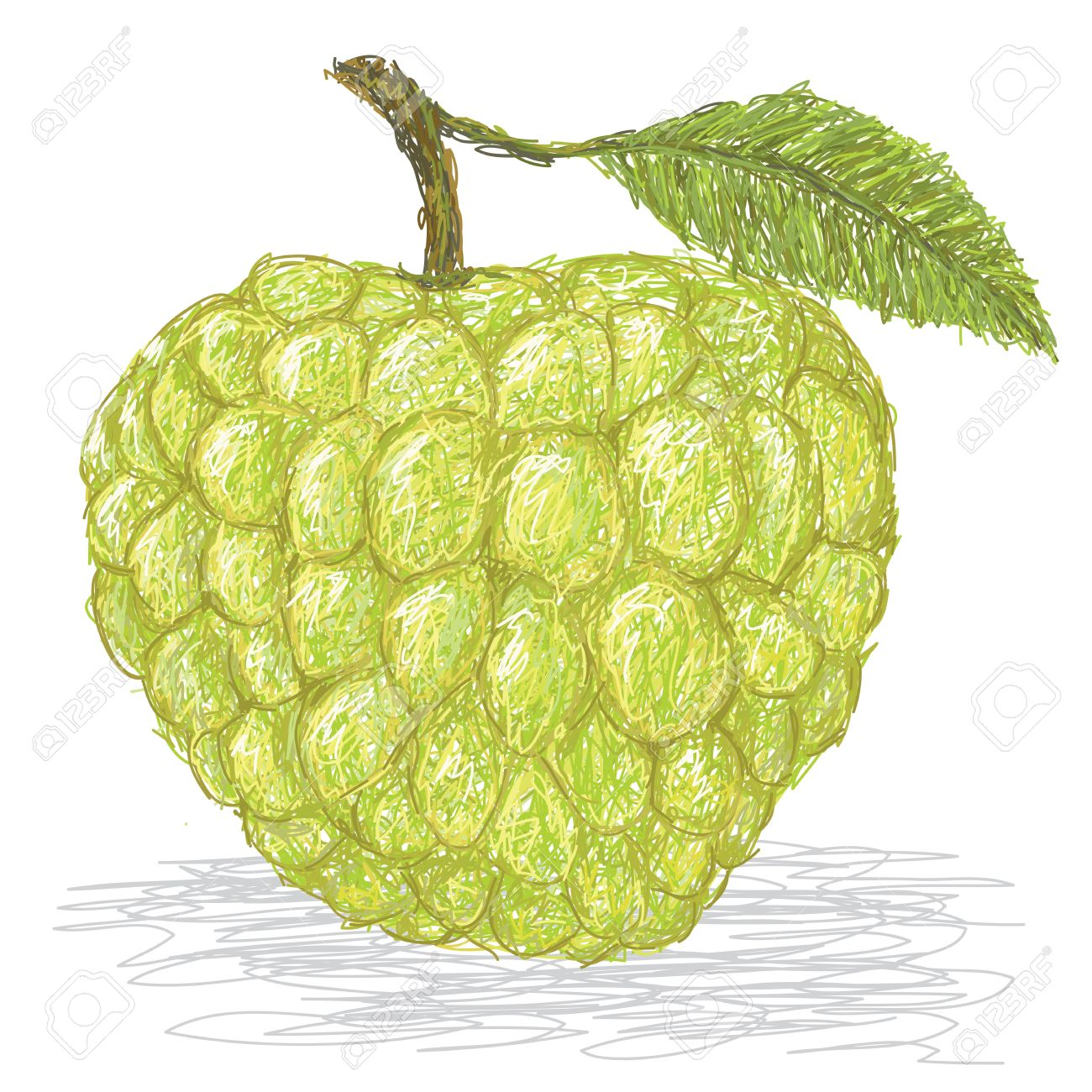 188 Custard Apple Stock Vector Illustration And Royalty Free.