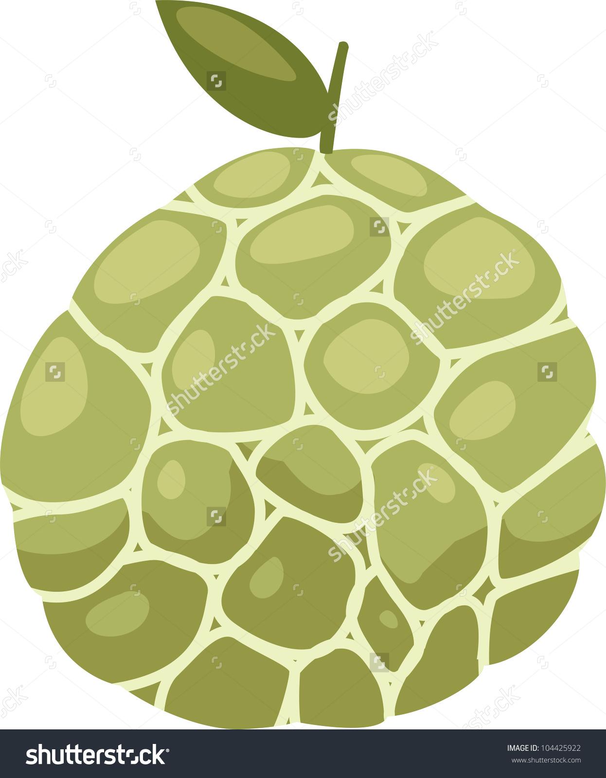 Illustration Custard Apple Vector File On White Background.