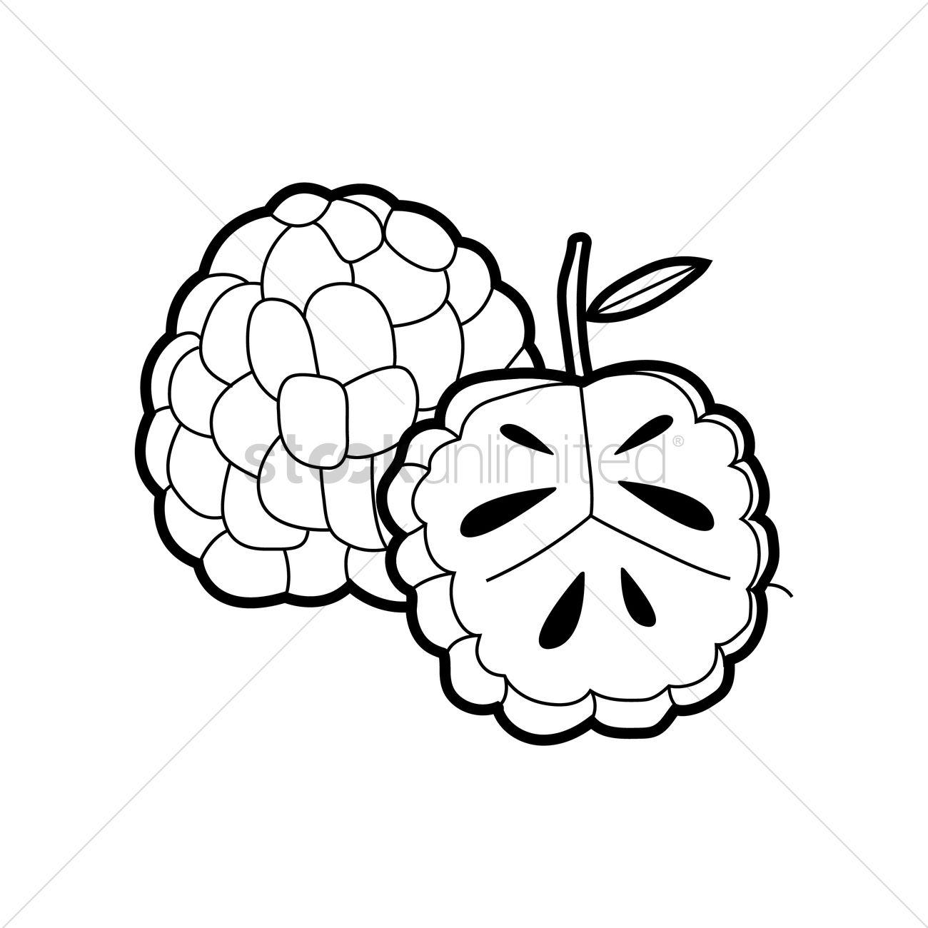Custard apple Vector Image.