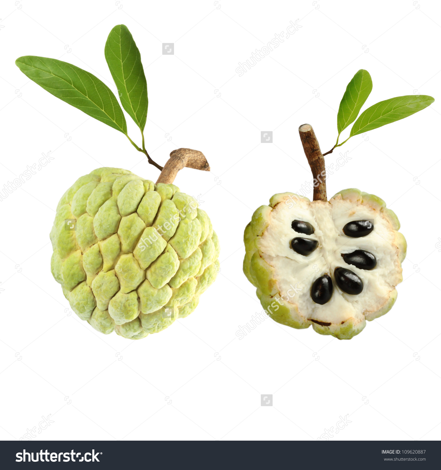 Custard Apple On White Background Stock Photo 109620887.