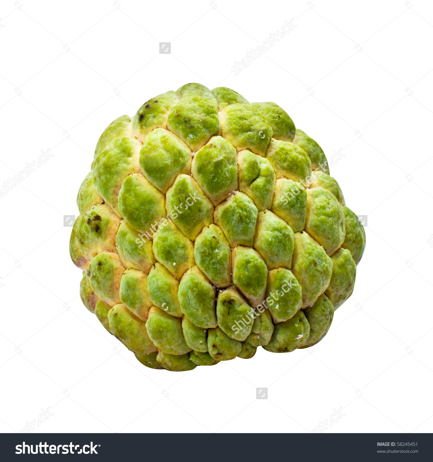 Clipart Of Custard Apple Clipground
