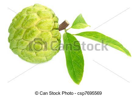 Stock Photographs of Custard apple over white background.