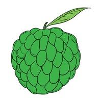 Fruit Fruits Line Art Motif Motives Outline Outlines Custard Apple.