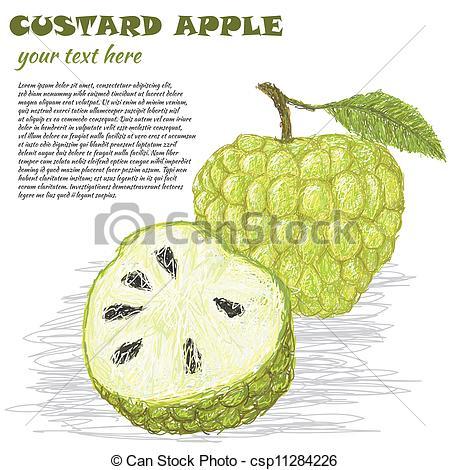 Vector Illustration of custard.