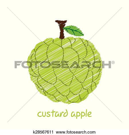 Clipart of custard apple, sketch design k28567611.