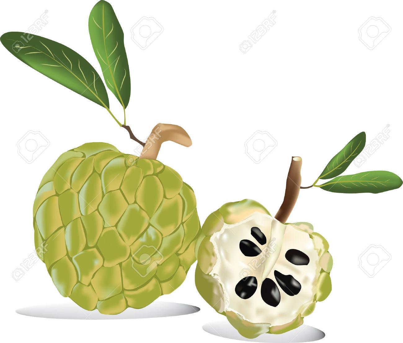 Thai Fruit Custard Apple Of Fresh Custard Apple Isolated In White.