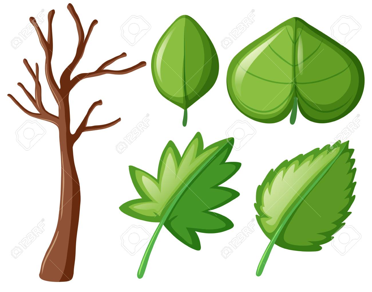 Different Shapes Of Green Leaves Illustration Royalty Free Cliparts.