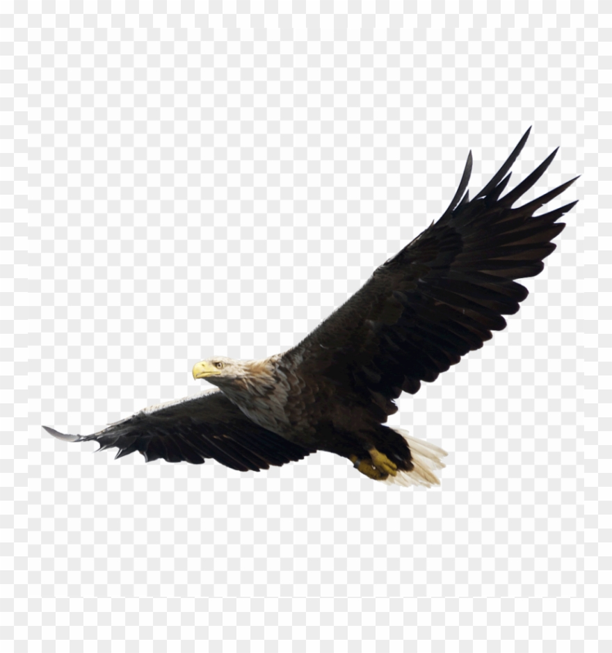 Free Png Download Majestic Bald Eagle Flying Png Images.