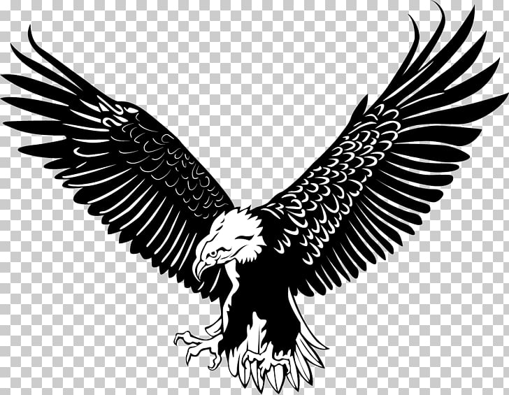 Bald Eagle Bird, The eagle fly, white and black eagle stencil PNG.