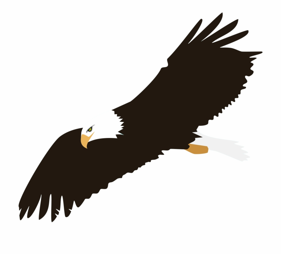 Soaring Eagle Png Image.