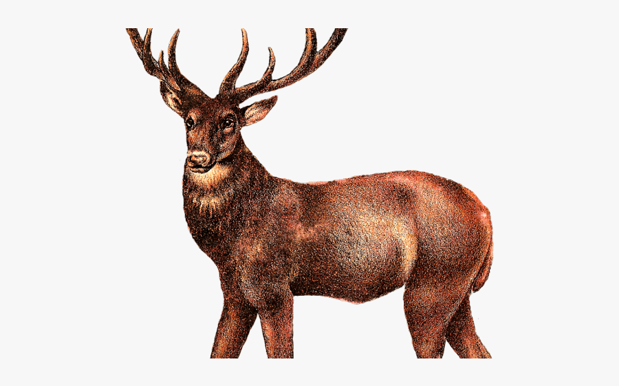 Transparent Elk Clipart , Free Transparent Clipart.