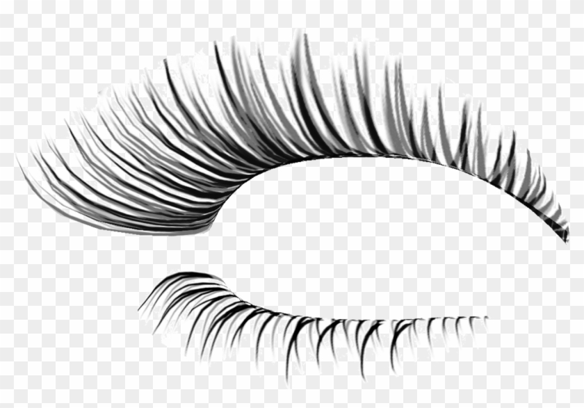 Cliparts For Free Download Eyelash Clipart.