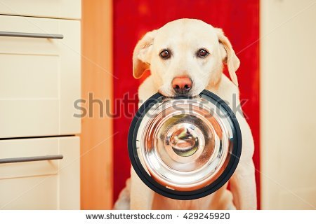 Hungry Stock Images, Royalty.