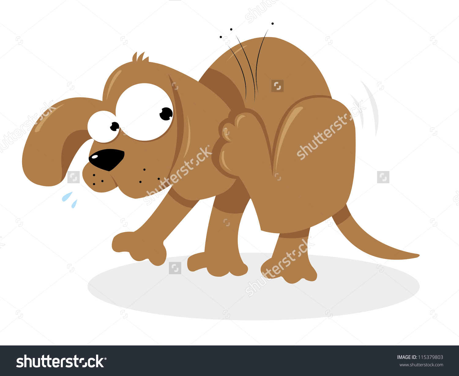 Showing post & media for Flea and dog cartoon.