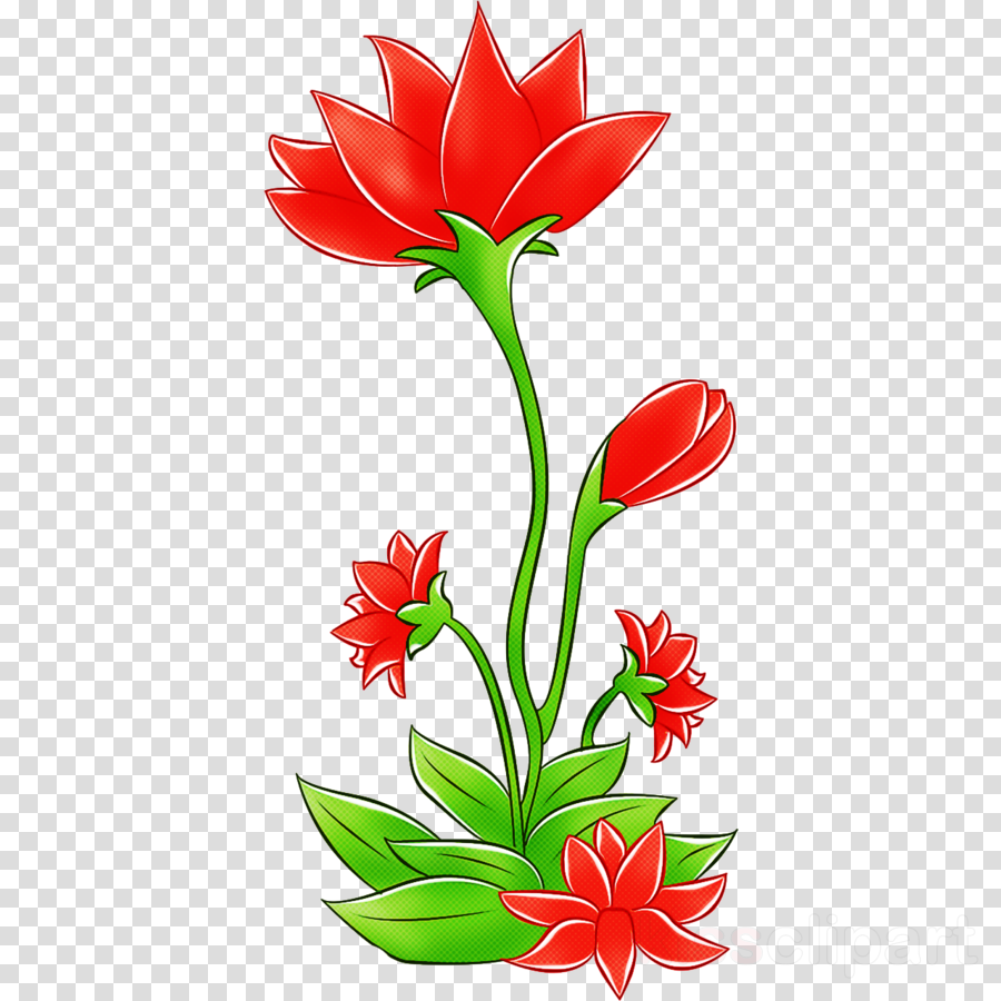 flower red plant tulip cut flowers clipart.