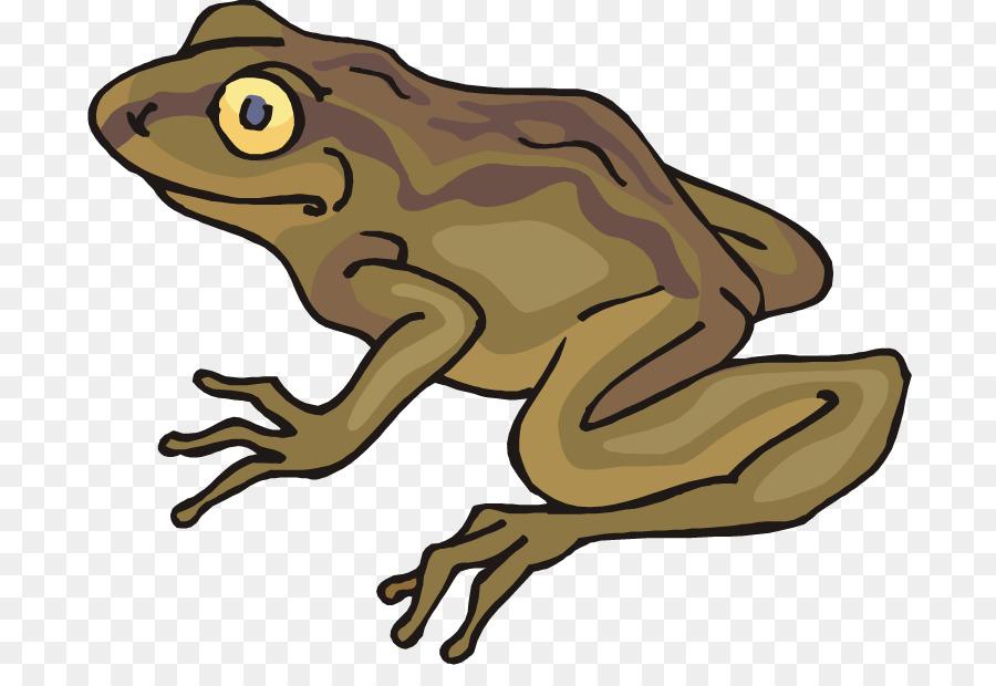 Frog Cartoon.