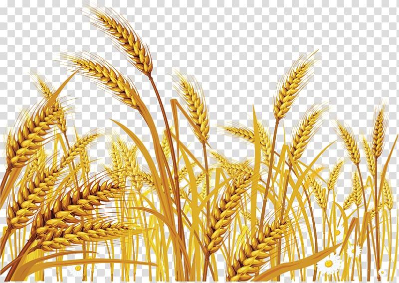 Grains illustration, Wheat Euclidean Cereal , Wheat.