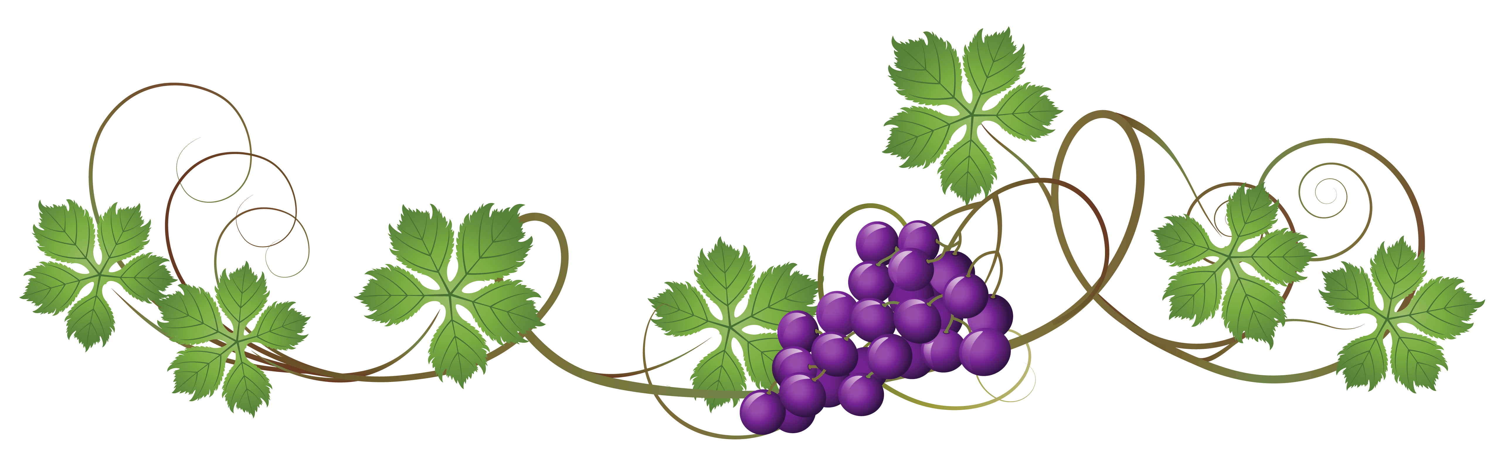 Free Grape Vine Png, Download Free Clip Art, Free Clip Art.