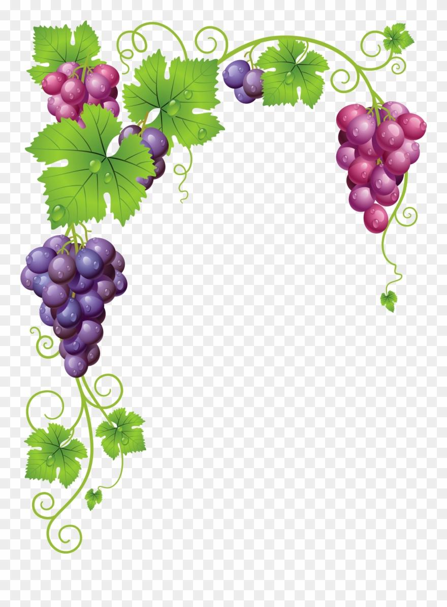 Grape Vine Clipart Png.