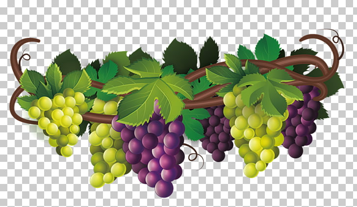 Common Grape Vine Wine Desktop , raisin PNG clipart.