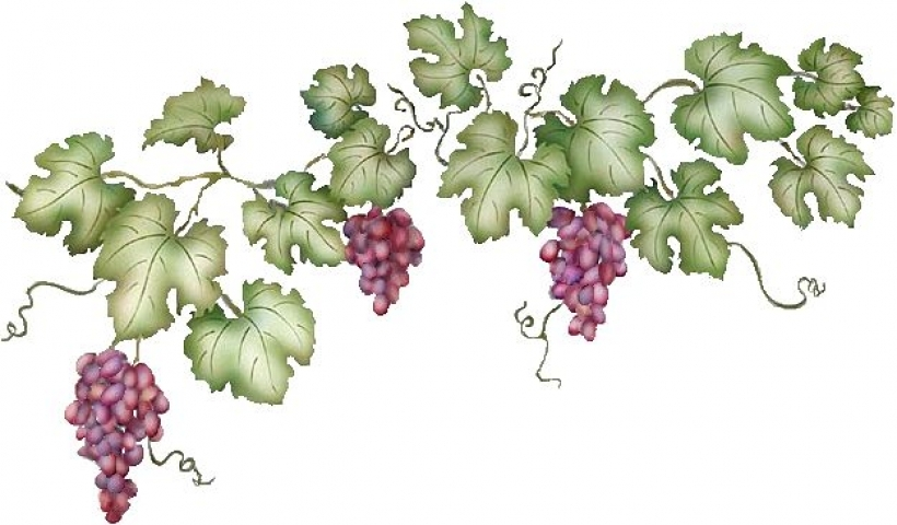 Free Grape Vines Png, Download Free Clip Art, Free Clip Art.