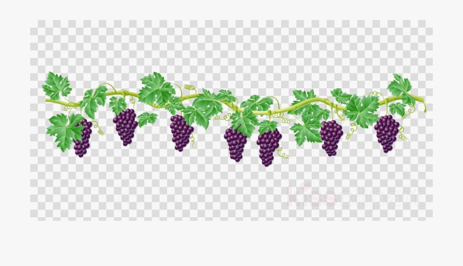 Vine Clipart Grape.