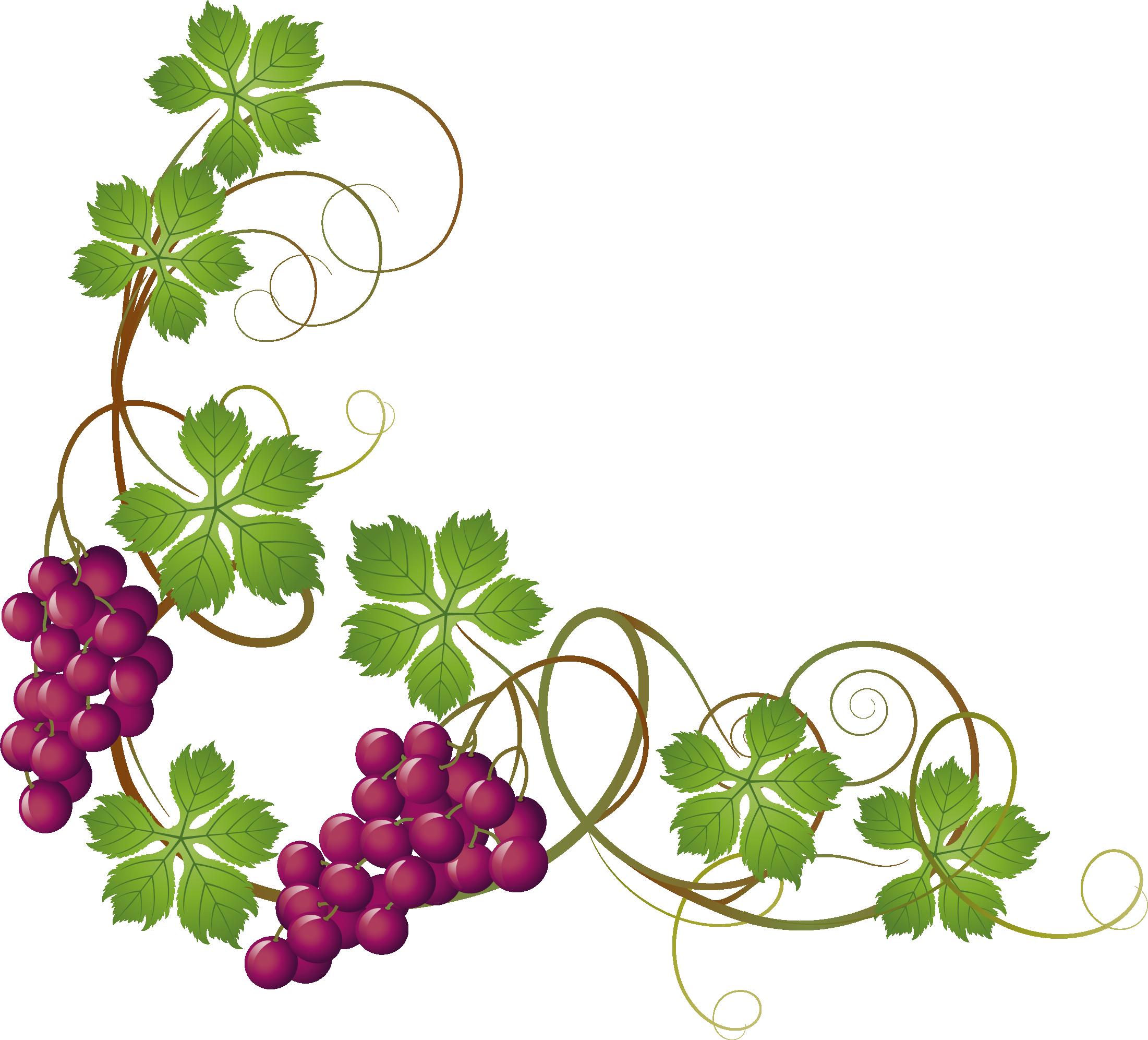 Grape Vine Clipart at GetDrawings.com.