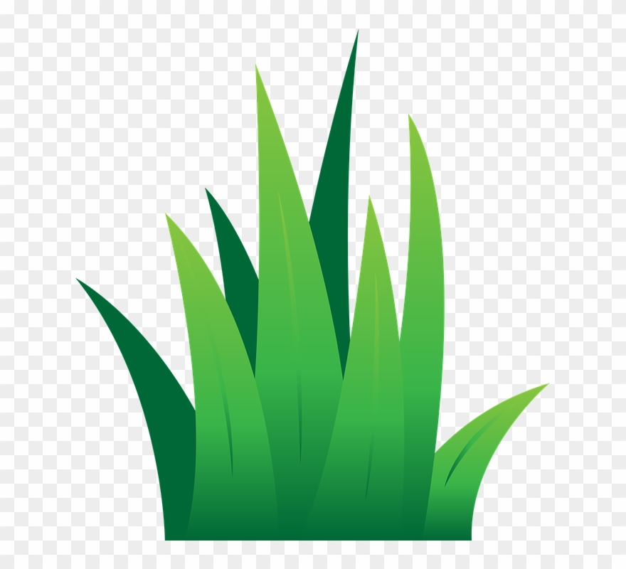 Lawn Clipart Leaves Grass.