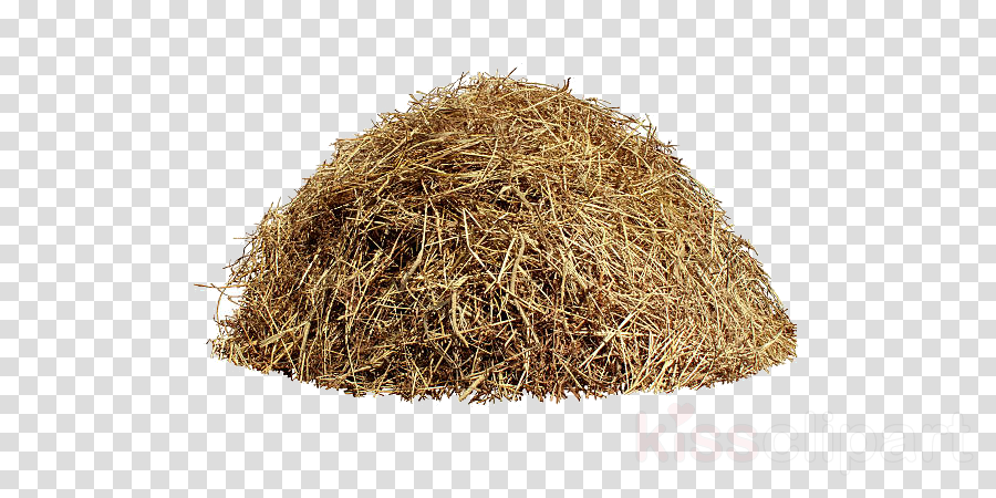 hay plant straw clipart.