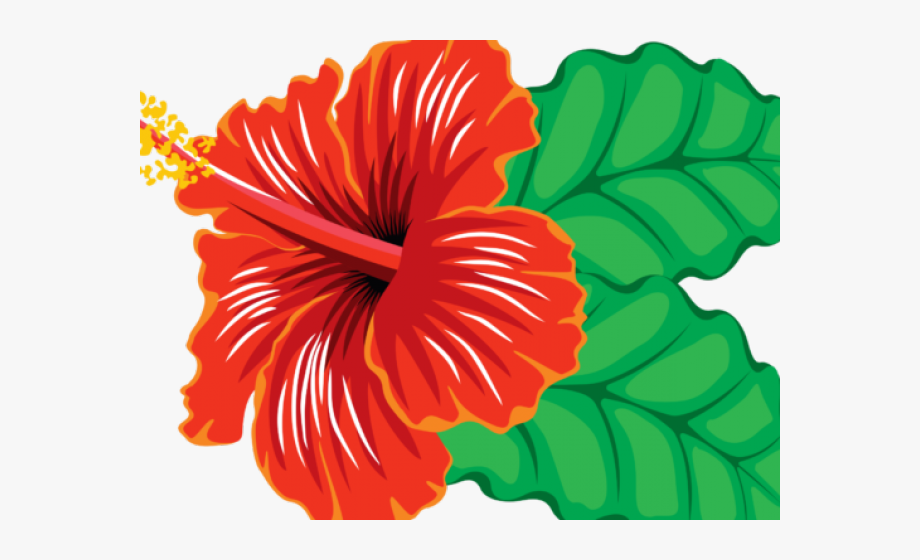 Hibiscus Clipart Real Flower.