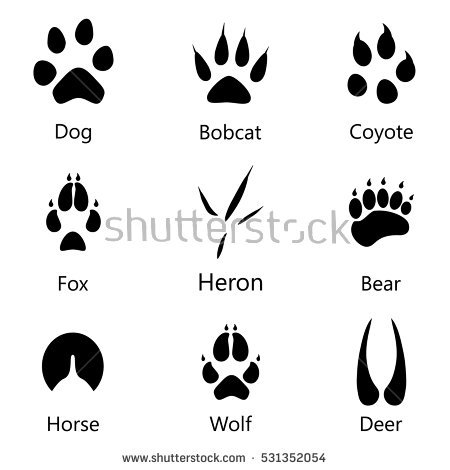 Hoof Stock Images, Royalty.