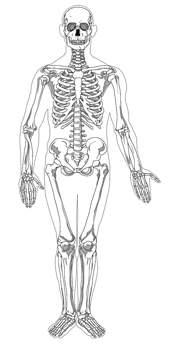 Human body skeleton clipart clipartfest.