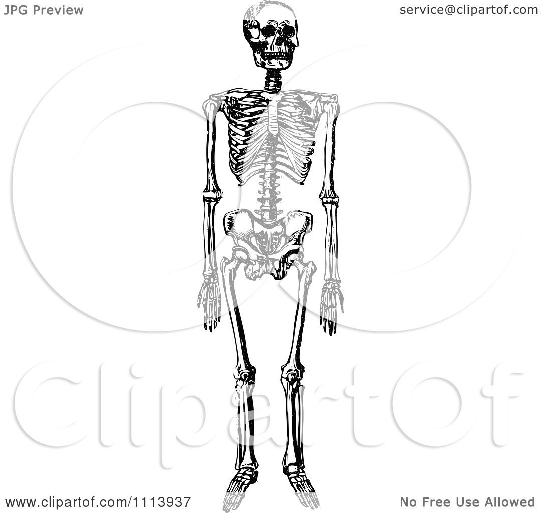 Clipart Vintage Black And White Human Skeleton.