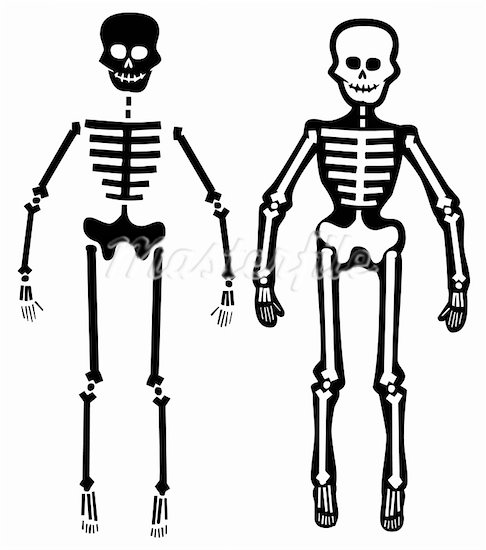 Human Body Skeleton Clipart.