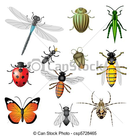 Clipart Vector of Insects or bugs, vector collection, set of 11.
