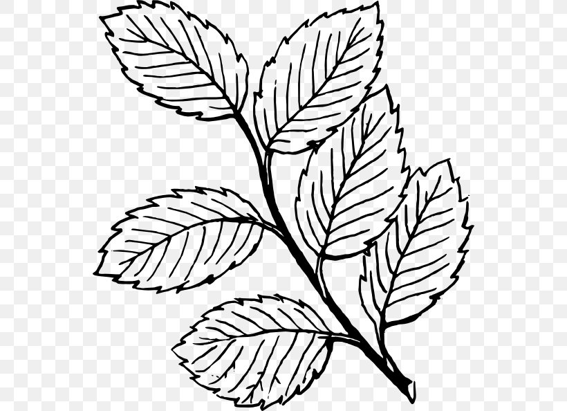 Look At Leaves Autumn Leaf Color Black And White Clip Art.