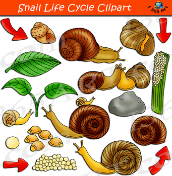 Snail Life Cycle Clipart.