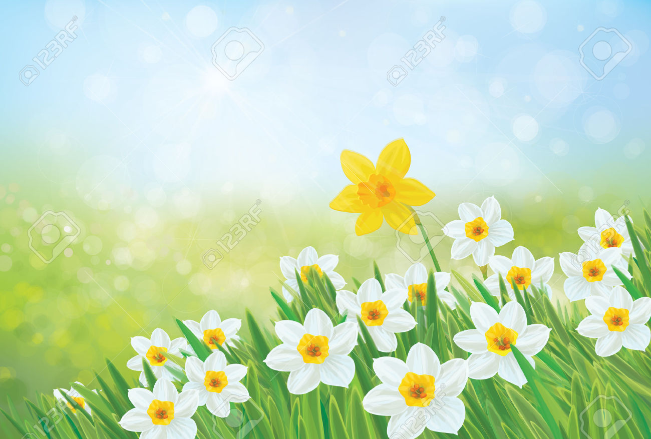 Vector Spring Nature Background, Daffodil Flowers. Royalty Free.