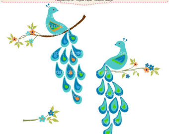 Peacock clip art clipart pictures.