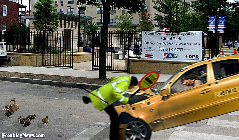 Crossing Guard Getting Hit by a Car Pictures.