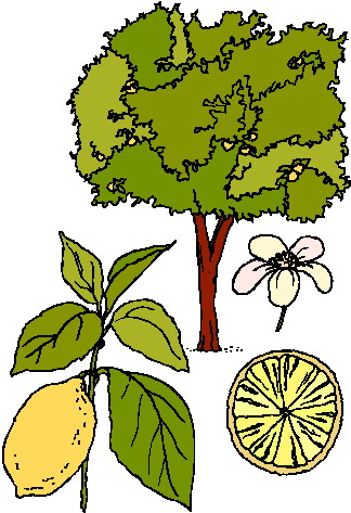 5980 Plant free clipart.