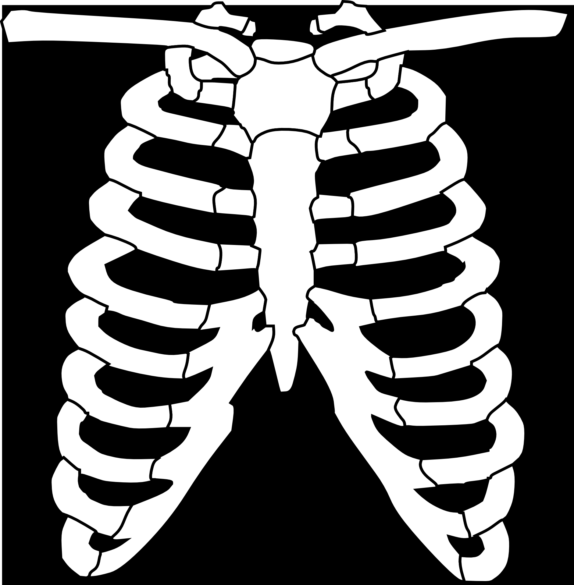 Clipart of the ribs free image.